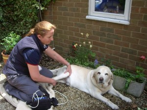 Canine physiotherapy
