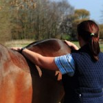 Oxford Equine Physio