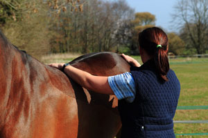 Equine physio back