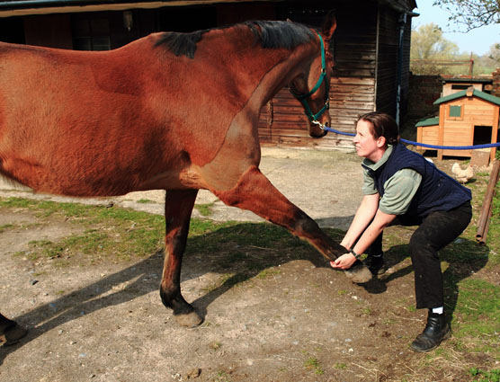 Equine Physio front leg stretch