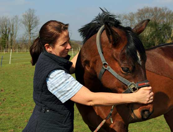 Equine Physio neck bend