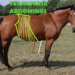 Oxford Equine Physio - Equine pilates