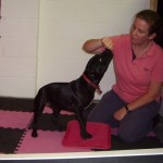 Dog Physiotherapy assessment