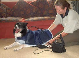 animal physiotherapy for dogs