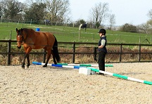 Oxford Equine Physio - Equine Pilates
