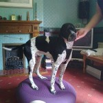 Canine physiotherapy after an operation