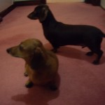 Squeak and Rolo (2)