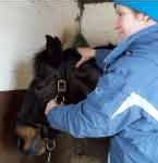 Equine Physiotherapy for Horses on Box Rest
