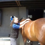 Equine physiotherapy - injury rehabilitation 2
