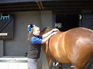 Animal Physio for Equines
