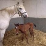 My new foal