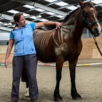 horse and rider pilates demo