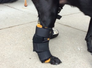 With Thera-Paw Uk Canine Tarsal Splint