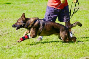 carpal gsd in motion low kb