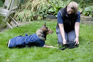 Dog Physiotherapy Pulsed Magnetic Therapy